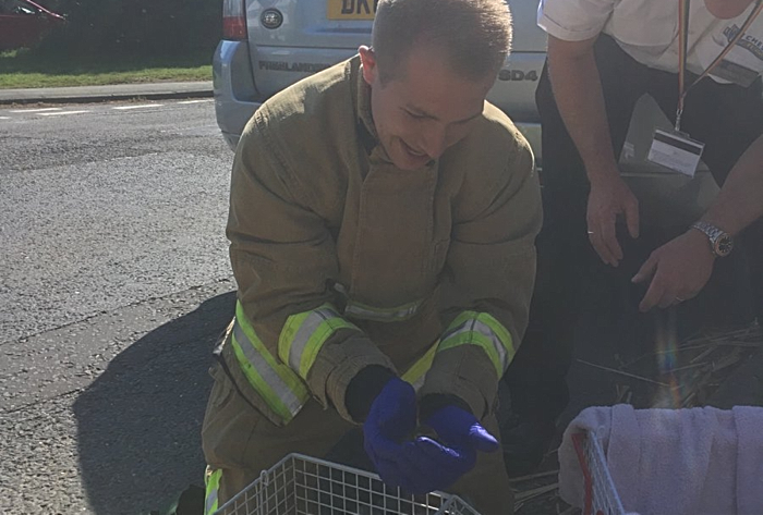 rescued ducklings by nantwich fire