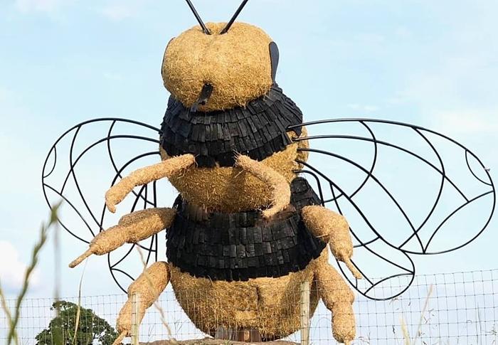 snugburys bee