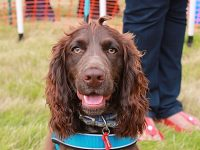 RSPCA Stapeley Grange to stage 25th anniversary summer fair