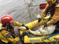 Fire crews rescue swan after dog attack in Nantwich