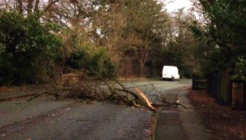 tree blocking A51 London Road at Nantwich