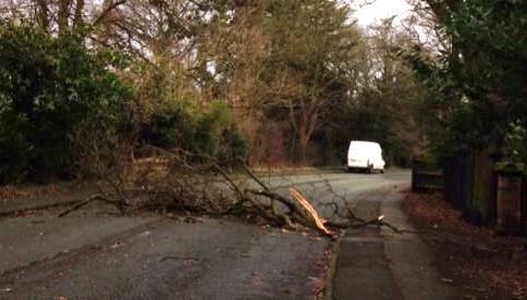 tree blocking A51 London Road at Nantwich