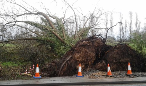 tree blown down in storm off A51 Stapeley
