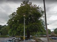 Iconic tree in Nantwich to be removed, council confirms