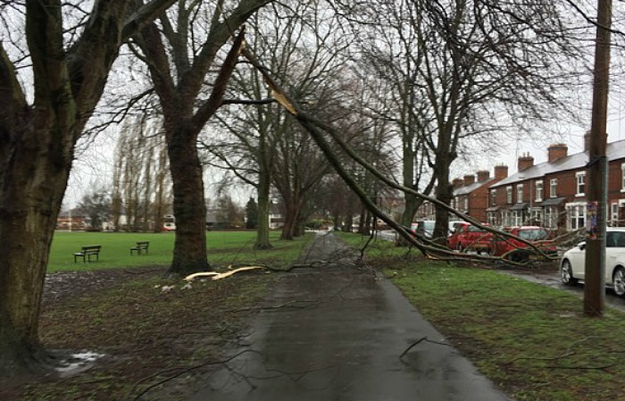 tree damage nantwich, Storm Doris