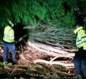 tree down A51 in Nantwich, being cut up by workmen