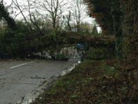 Storm Doris causes havoc across Nantwich and Cheshire
