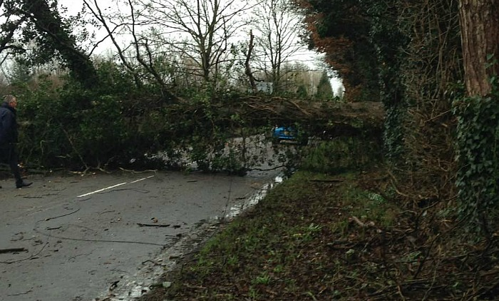 tree down Main Road, Worleston
