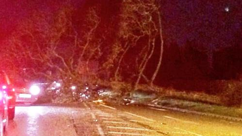 Picture update: Storm blows trees down across Nantwich