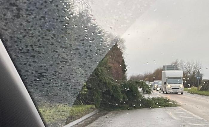 tree down on A51 at Cheerbrook