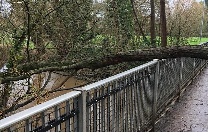 tree down on bridge over river weaver nantwich