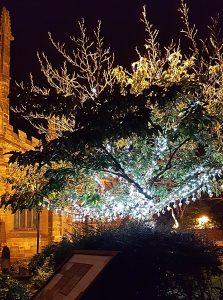 tree of light