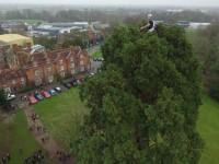 Reaseheath arborist sings Christmas carols from tree tops