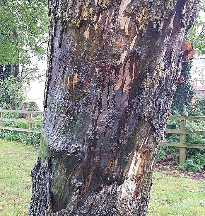 trees vandalised in hough