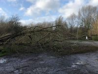 Floods and fallen trees across South Cheshire during Storm Ciara