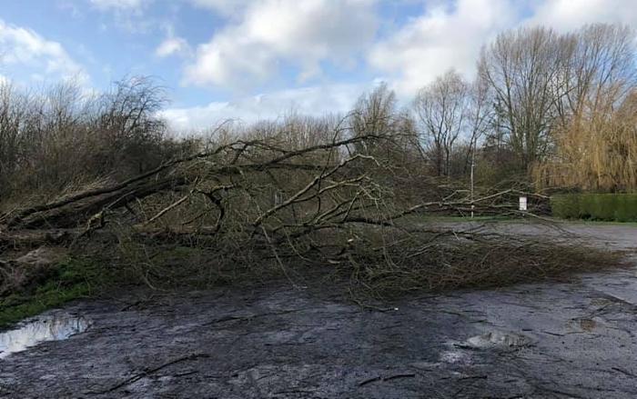 trees down at shrewbridge road