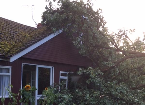 Nantwich Couple S Shock As Trees Crash Through Their Home Nantwich