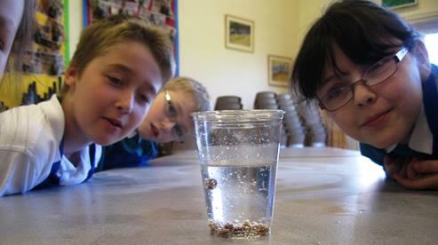 Nantwich primary pupils enjoy Science Week events